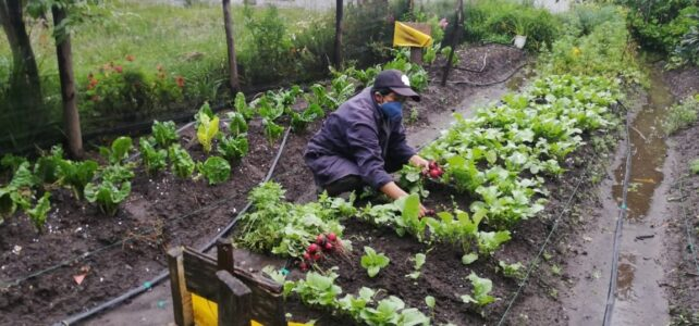 Speaker Series #13 –  Building Effective Food Systems for Cities